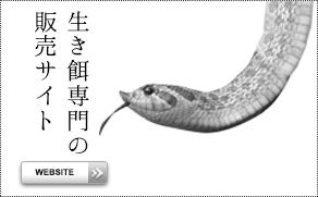 生き餌専門サイト
